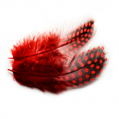 Перья Жемчужные, Красные